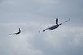 Heritage Flight Boeing C-17A Globemaster III de Havilland CV-2B Caribou 62-4149 1st Pass 20 SNF 16April2010 (14629963772).jpg