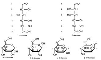 Open-chain compound - Above the open-chain forms of glucose and mannose. Below the cyclic forms.
