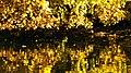 Hidden Ducks - panoramio.jpg