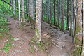 Hiking path Lac des Plagnes (1).jpg