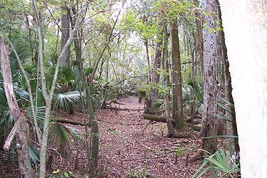 Hillsborough River State Park 13.jpg