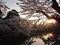 Hirosaki Park (during the sakura) - panoramio (5).jpg