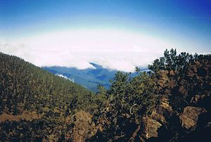 Hispaniolan pine forests - Hispaniolan pine forest as seen from Pico Duarte