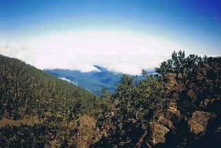 Hispaniolan pine forests