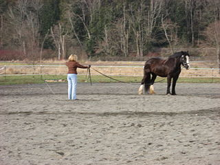 Longeing A technique for training horses, where a horse is asked to work at the end of a lunge line.