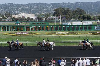 Golden Gate Fields - Horses and jockeys before a race at Golden Gate Fields