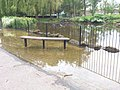 Hotham Park After all the Flash Flooding - panoramio (5).jpg