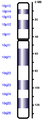 Human chromosome 10 from Hemabase database.png
