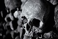 Human skull in the catacombs of Paris (20059624655).jpg