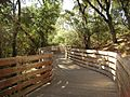 Humbug Creek pedestrian path - panoramio.jpg