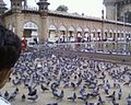 Hundreds of sparrows!!.jpg