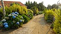 Hydrangea alley (38064376552).jpg