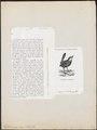 Hylactes megapodius - 1872 - Print - Iconographia Zoologica - Special Collections University of Amsterdam - UBA01 IZ19200427.tif