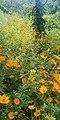 IMG of flowers.jpg