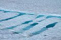 Icy patterns (6443837315).jpg