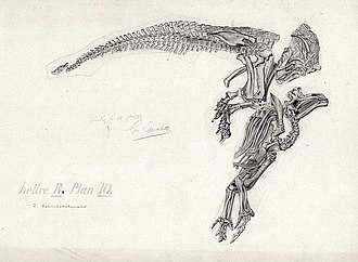 Iguanodon - Iguanodon bernissartensis fossil drawn as it was found in 1882