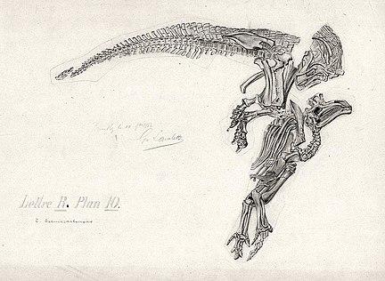 Iguanodon4
