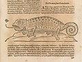 """Illustration of a chameleon from """"Ars Magna Lucis et Umbrae"""".jpg"""