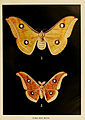 Indian insect life (Plate XLIII) (6280040906).jpg