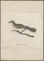 Indicator minor - 1700-1880 - Print - Iconographia Zoologica - Special Collections University of Amsterdam - UBA01 IZ18800299.tif