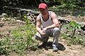Infamous coca plant (4626286634).jpg