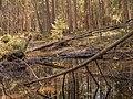 Ingobokällornas naturreservat 02.jpg