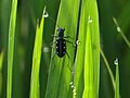 Insect on grass.jpg