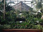 Inside Garfield Park Conservatory.jpg