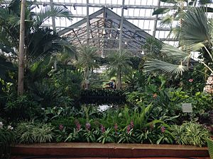 Garfield Park Conservatory - view of the Conservatory Fern Room
