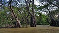 Inside View of Ratargul Swamp Forest.jpg