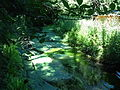 Isarauen Wasserpflanzenteppich.JPG