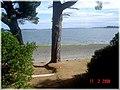 Isla Helvecia, Calbuco (2313787490).jpg