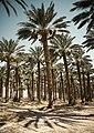 Israel (4767353607).jpg