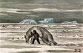 Jakob Danielsen - 09 Kaassassuk and the dead bear.jpg