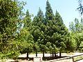 Jardín botánico Torre del Vinagre 04.jpg
