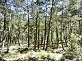 Jeep safari Kemer - Gedelme - Ovachik - panoramio (25).jpg