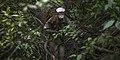 Jungle Warfare - Marine Corps Mountain Warfare Training Center Bridgeport, California.jpg