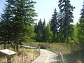 Jurassic forest south discovery trail.JPG