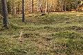 Kapellbäckens gravfält (Hedemora 65-1) 17.JPG