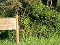 Kasokwa Forest 02.jpg