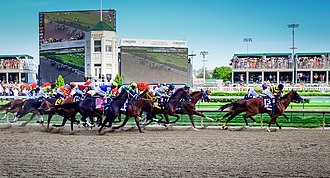 2014 Kentucky Derby - The 2014 Kentucky Derby field. Winner California Chrome is the third horse from the right.