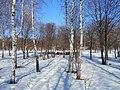 Khimselyshche, Cherkasy, Cherkas'ka oblast, Ukraine - panoramio (182).jpg