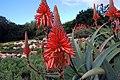 Kirstenbosch-007.jpg