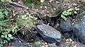 Kissakosken ruukki Säyneinen 18.jpg