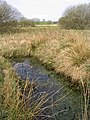 Knowetop Lochs Wildlife Reserve - geograph.org.uk - 417901.jpg