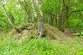 Koenigsbruecker Heide 08.jpg