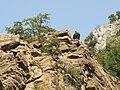 Krichim-monastery-rock-eagle.jpg