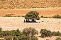 L'arbre généreux.jpg