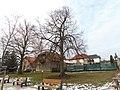 Lípa presidenta Edvarda Beneše u školy v Lánech (Q107161516) 01.jpg