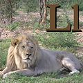 L is for Lion.jpg